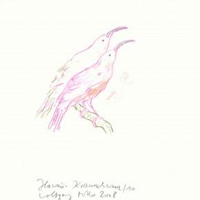 """Wolfgang Müller, """"Hawaii Krausschwanz"""", Zeichnung aus der Serie """"Séance Vocibus Avium"""", 2010"""